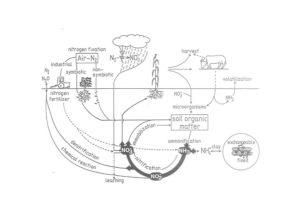 Der Stickstoff-Kreislauf und seine Medien